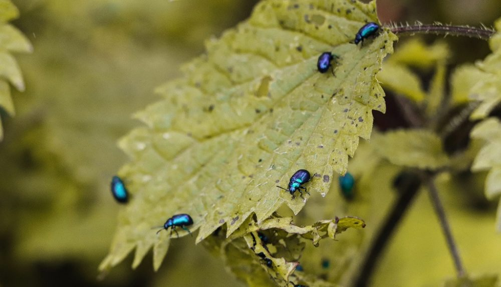 Controlling Flying Insects