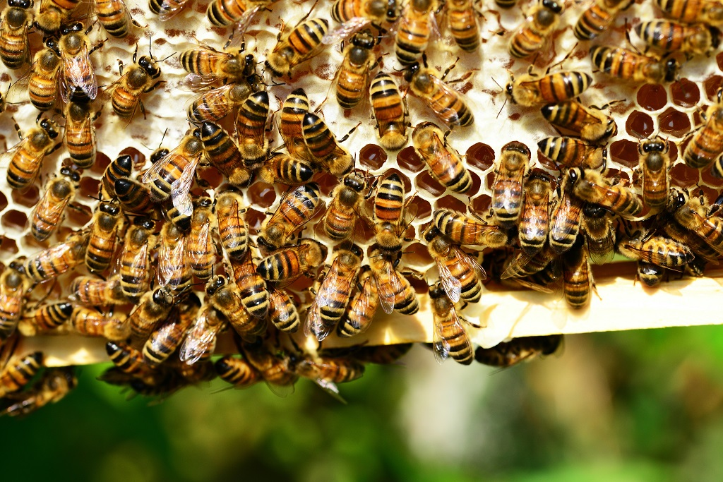 Do You Want To Prevent Honey Bees To Build Their Nesting Near Your Home?