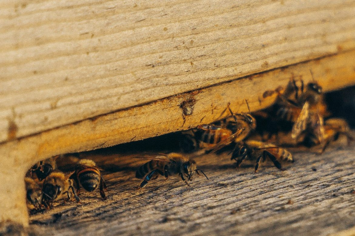 Pest Control – Pesky Tiny Nuisances That Cause Havoc in Your Home