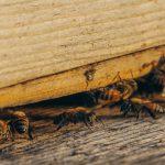 Pest Control - Pesky Tiny